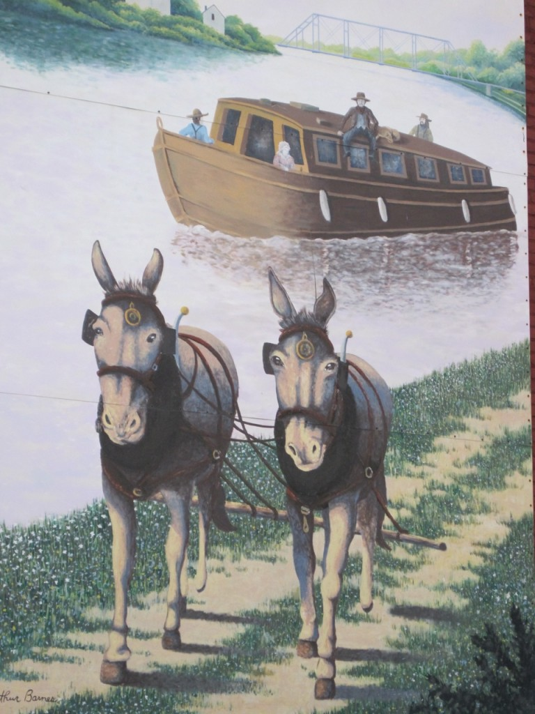 mules walking by riverboat