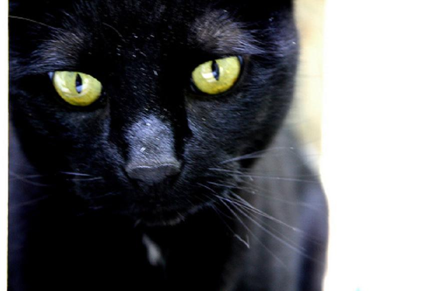picture of a black cat