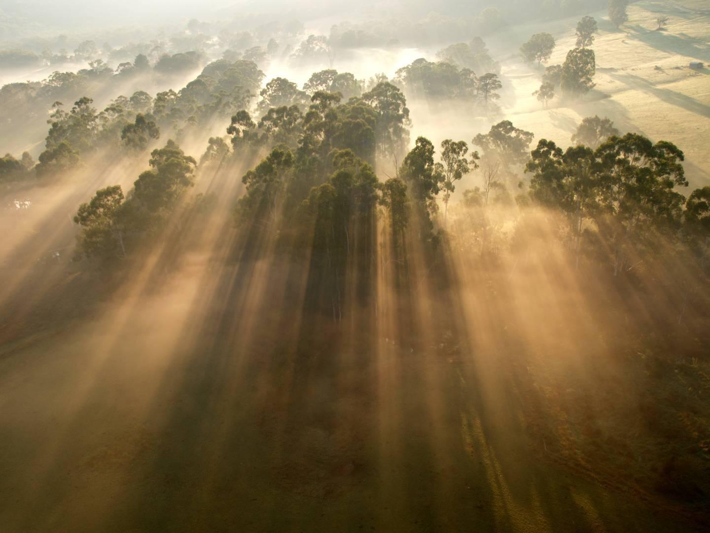 photo of sunshine through trees