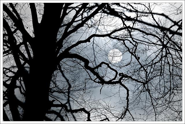 creepy tree and moon