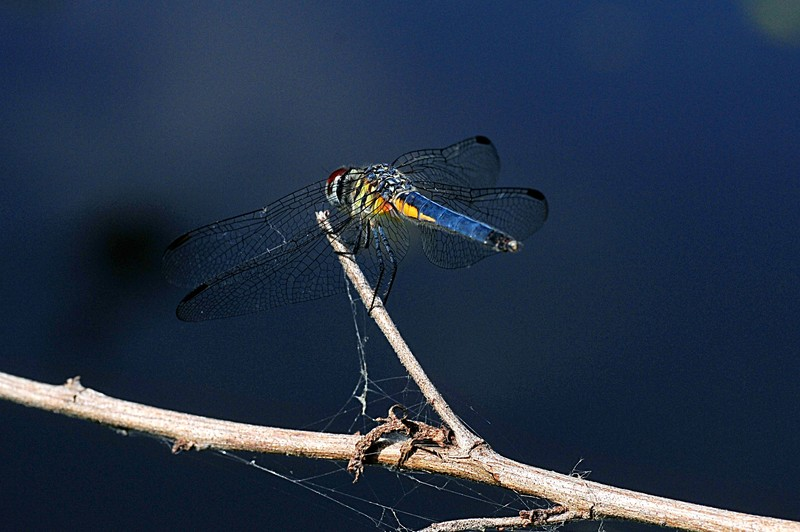 photo of dragonfly