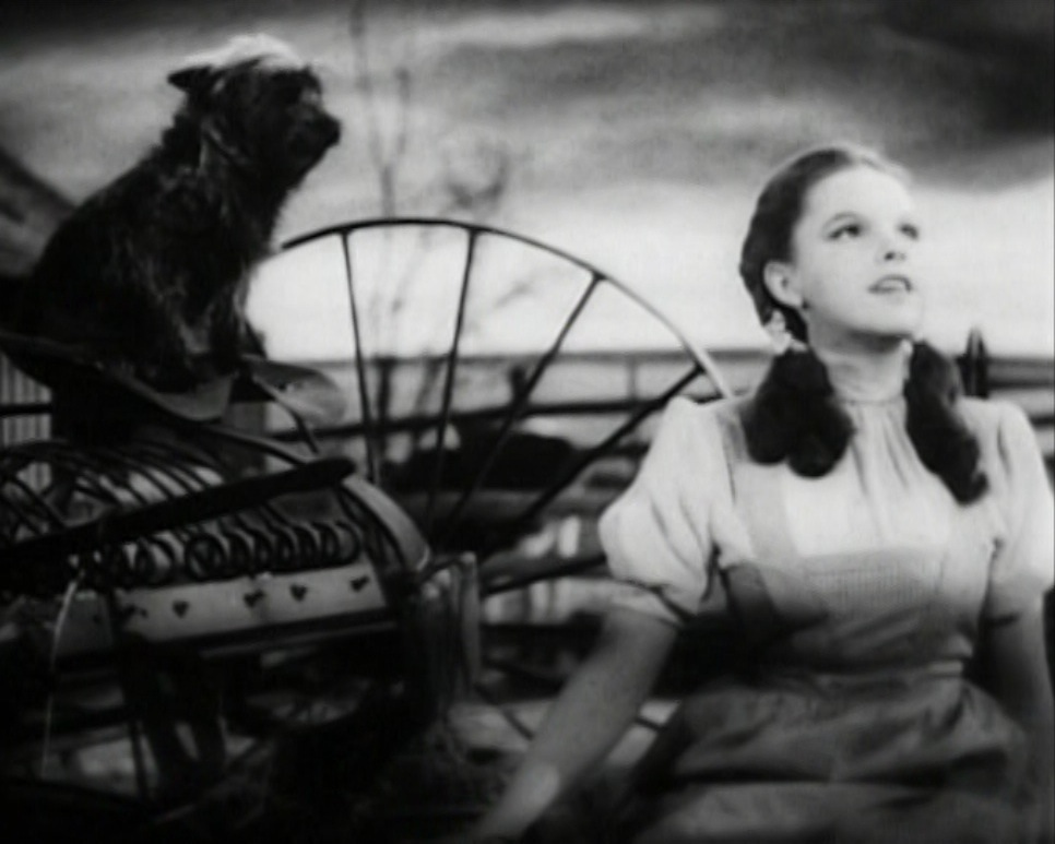 toto and dorothy picture